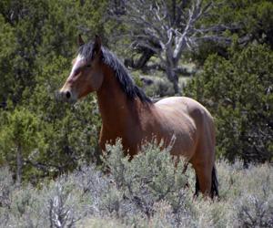 Wild Horses Tour