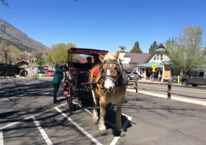 Rural RoundUp Minden Nevada