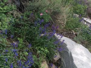 Island Lake Flowers